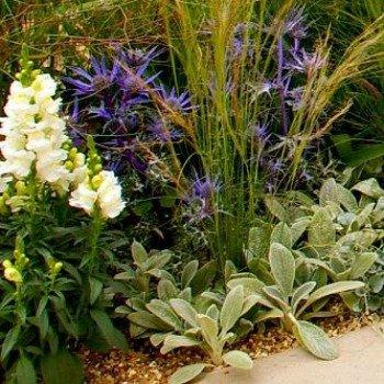 Native English Plants garden detail