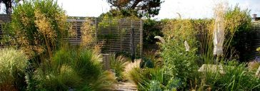 Wild planting with grasses and climbers